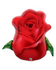 Punainen Ruusu muotofolio